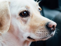10 Great Reasons for Owning a Dog
