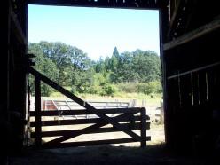 June Visitors on the Farm: The Dale Saga Continues