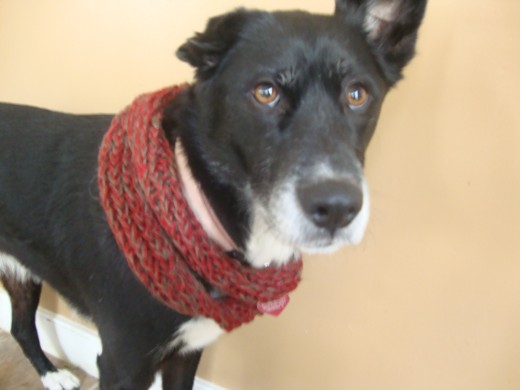 Dog Infinity Scarf (one of many :)