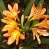 Tricia1000 profile image