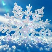 Elizabeth-Snow profile image