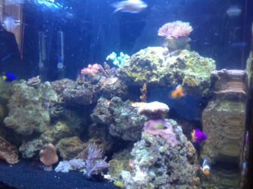 Looking inside my 30 gallon Biocube marine reef aquarium