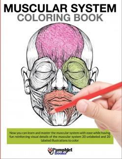 Using The Muscular System Coloring Book For Coaching & Personal Training