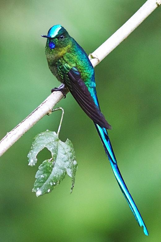 Taken in N.E.Ecuador