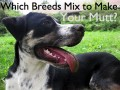 How to Identify the Breeds in a Mixed-Breed Dog