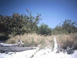 Natural Forest in Marsegu Island www.wisatamelayu.com