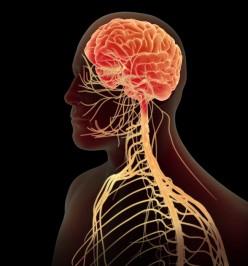 *Pathology of the Nervous System*