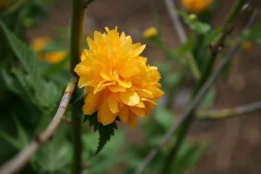Arrowhead Alpines Blog: ¿Por qué los colibríes como las flores rojas (pista: en realidad, no lo hacen.)