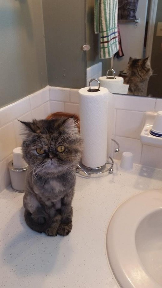 After almost losing my life and coming back home, my pretty persian girl would not leave my side. Even to let me shower.