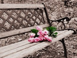 Roses on a bench.