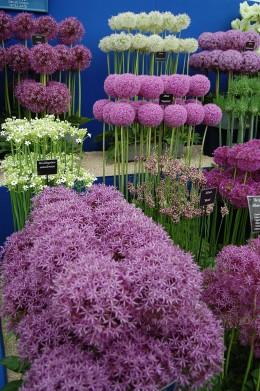 Taken at the BBC's Gardeners World show.