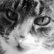 jasmith1 profile image