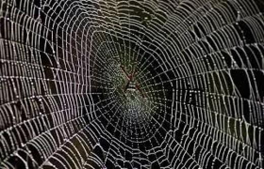 Clean fresh spiders web
