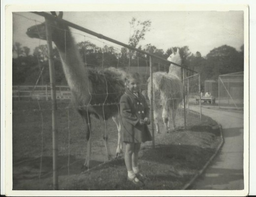 Plymouth Zoo early 1960s