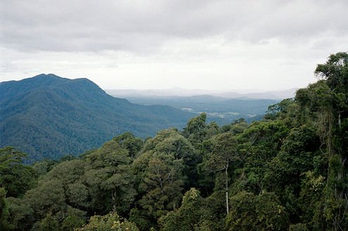 A tropical rainforest, the source of today's natural medicines.