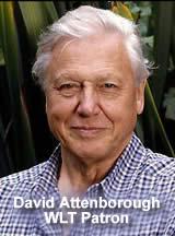Sir David Attenborough Champion Of Endangered Environments And Species.