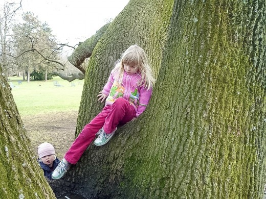 Climbing a tree can be an interesting challenge and builds physical fitness. The higher a child climbs, however, the more risky the activity.