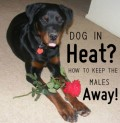 How to Keep Male Dogs Away From Females in Heat