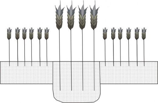 Diagram of a positive cropmarks - designed by Weronika Koblynska.