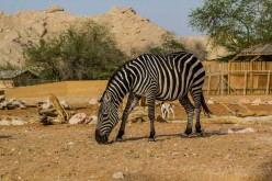 AL AIN Zoo in Abu Dhabi is a place for the Nature Lover