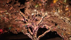 The Snow Tree: A Photo Gallery