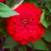 Healing Gardens profile image