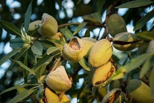 Almonds To Exfoliate