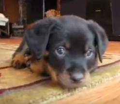 Remove your pet odor from the carpet the sensible way!