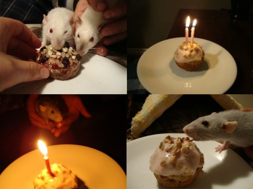 Various rats' birthdays—these guys are introduced at the bottom of this article