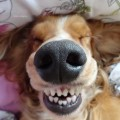 The Cheap Way to Keep Your Dog's Teeth Clean