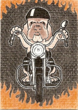 bull dog on motorcycle sold for $1.99