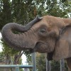 loveforelephants profile image