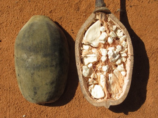 The super-fruit, baobab