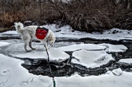 I let K2, the Great White Kuvasz, play a little before setting off on a birding trip.