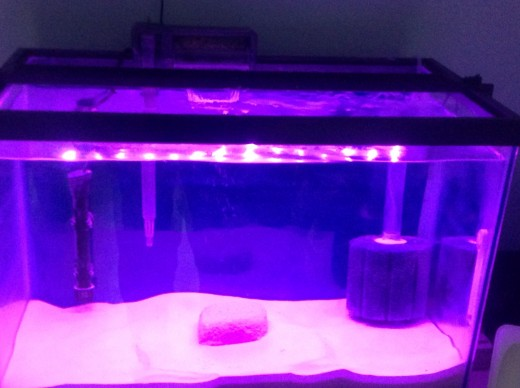 As you can see from this photo, I am using a larger Eco-Bio Block, which I purchased through Amazon for $37. Though not cheap, they do the job of maintaining a high level of water quality. The Eco-Bio Block is in center of my saltwater hospital tank.