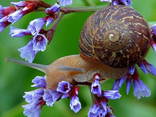 How Are Snails & Beauty Related?