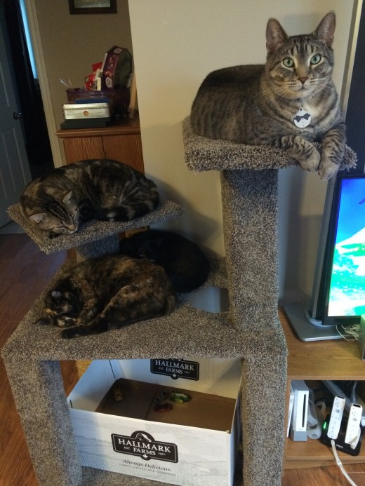 We have since added a few furry additions to our family, and as you can see, Sheldon is still the king up on his perch!