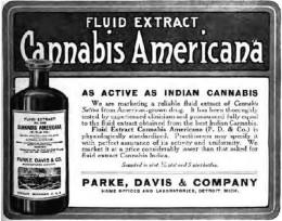 Cannabis Tinciture