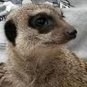 mewsie82 profile image