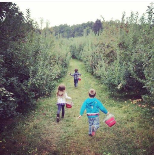Vegetable and fruit picking can be a super fun day out! Letting your kids run free, a great teaching opportunity and you'll be buying what you already do!
