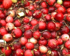 What's all the Craze About Cranberries For the Holidays?  Cranberry Facts and Great Recipes.