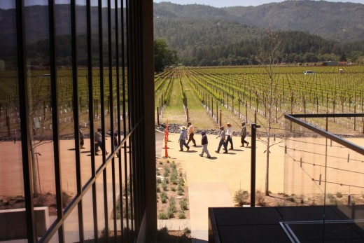 View from Hall Winery