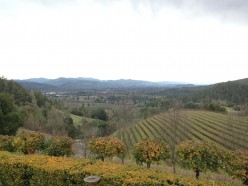 A Day in Napa Series: #2