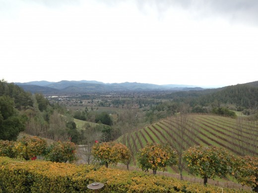 View from Newton Vineyard