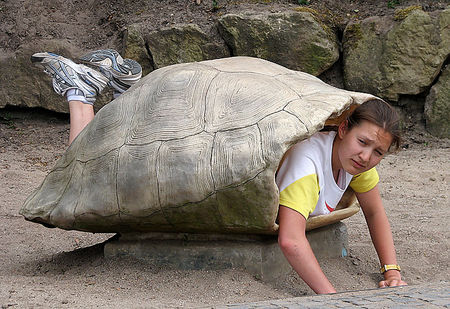 "You can use the shells of giant turtles as your secret place for napping, thinking, and just enjoying some ""alone time."""