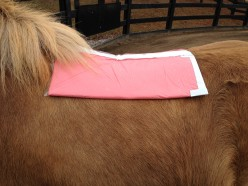 Cassidy's Saddle Impression Pads
