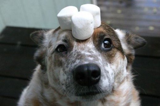 Don't put food on your dog's head in front of your children. It leads to way too many messes...