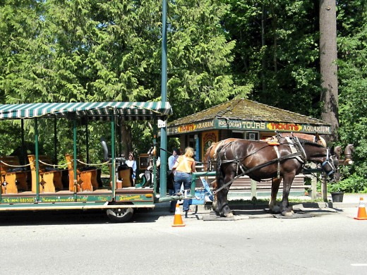 The horse-drawn carriage ride