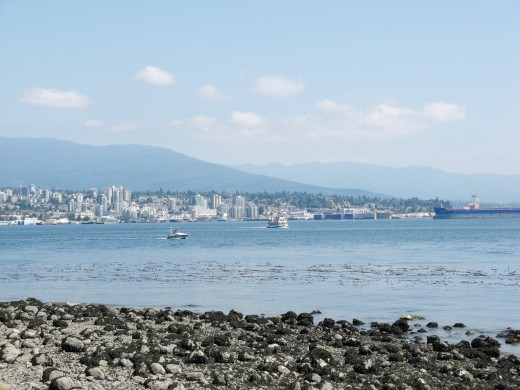 Burrard Inlet, bull kelp bobbing in the ocean and rockweed on the beach