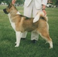 The Most Popular Large Dog Breeds and How to Care for Them